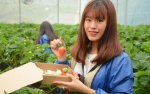 Vườn dâu tây ở Sa Pa thu phí tham quan 4 ngày nghỉ lễ