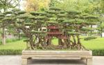 Kiệt tác sanh cổ mọc trên đá gây 'chấn động' giới chơi cây xuất hiện ở Hà Nội