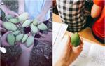 'Sống lại' thời sinh viên nghèo với kỉ niệm đến quả xoài xanh cũng phải vật vã 'chôm' trộm của trường, lén lút ăn trong giờ học