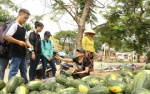 Bất chấp nắng nóng gay gắt, sinh viên Sài Gòn ra sức giúp nông dân Quãng Ngãi 'giải cứu' dưa hấu