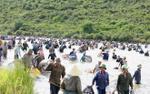 Hàng nghìn người dân tham gia lễ hội bắt cá lớn nhất Hà Tĩnh