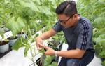 Mỗi năm mất 1,5 tỷ đồng du học, 9X gác lại giấc mơ Mỹ về nước trồng hàng nghìn cây dưa lưới Nhật để khởi nghiệp