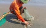 Những người cào cát bắt ngao: Trần gian có một thứ nghề