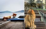 Có một nơi mà ở đó, mèo là 'bá chủ', còn con người thì 'rất phục tùng mèo'
