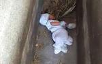 Giải cứu bé trai 2 tháng tuổi bị bỏ rơi giữa nghĩa địa