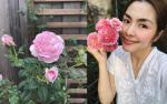 Mê mẩn khu vườn hoa hồng đẹp như mơ của Tăng Thanh Hà