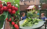 Vườn nhỏ mà đầy ắp cây trái, ai nhìn cũng thèm muốn của cô giáo Việt giữa trời Âu