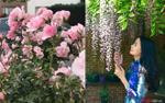 Khu vườn ngập hoa, ai cũng thốt lên muốn được đến 'sống ảo' của cô dâu Việt tại Bỉ