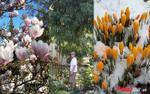 Chồng Tây 'nhà người ta' đổ mồ hôi sôi nước mắt để tặng vợ Việt cả khu vườn ngập hoa