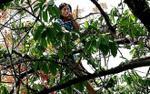 Cô gái nghi ngáo đá vứt xe và túi xách leo lên cây nhún nhảy la hét