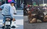 Bị lây bệnh dại, trộm chó quay sang bắt đền, khổ chủ đăng đàn nhờ dân mạng 'mách nước'