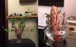 Dân mạng phát sốt với 'khoai lang sai' giá siêu rẻ, phiên bản 'nhà nghèo' của bonsai