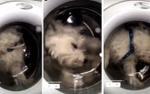 Sự thật sau video cô gái thả chó cưng vào máy giặt để tăng người theo dõi Instagram