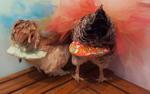 Người phụ nữ kiếm hơn 1 tỷ mỗi năm nhờ may tã cho gà