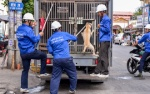 Nhiều chó thả rông không rọ mõm bị bắt giữ, người Sài Gòn vội vàng ôm thú cưng bỏ chạy khi thấy đội bắt chó xuất hiện