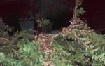 Ban đêm sang nhà hàng xóm vặt trộm ổi, cô nàng lạnh sống lưng khi thấy hàng trăm ánh mắt nhìn mình từ trên cây