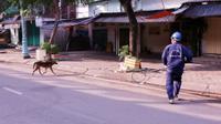 Bắt chó thả rông và 'tiêu huỷ sau 72h': Một chính sách cần thiết nhưng thực hiện chưa hợp lý