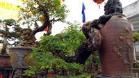 Cận cảnh hàng trăm cây kỳ dị, giá gần tỷ đồng trước Tết 2018
