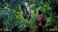 Giới trẻ mê mẩn vườn táo 'sống ảo': Vặt táo xanh ăn thoải mái, check-in ảnh đẹp giá chỉ 10K