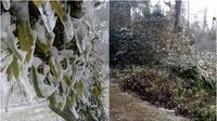 Sau Sapa, đến lượt Y Tý cũng trắng xóa vì băng tuyết bao phủ