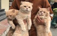 Lộ diện đàn con của chú mèo tên 'Chó' nổi tiếng khắp Hải Phòng, đứa nào cũng 'đẹp trai' giống bố!