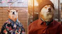 Nhờ 'thần thái' quá xuất sắc, chú chó Shiba này đã kiếm hơn trăm triệu một tháng!