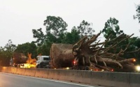 Chở cây 'khủng' như quái thú trên quốc lộ, doanh nghiệp bị phạt hơn 80 triệu đồng