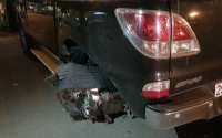Phút truy đuổi tài xế xe bán tải kéo lê nam thanh niên trọng thương rồi bỏ chạy