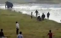 Lỡ bơi trong hồ có voi, người đàn ông bị dẫm chết không thương tiếc