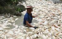 Nước nơi 1.500 tấn cá chết trên sông La Ngà có khí độc vượt mức