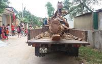 'Hợp đồng' cẩu trộm cây mít hàng chục năm tuổi có giá 40 triệu đồng
