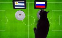 Mèo 'tiên tri' dự đoán bất ngờ về trận Nga - Uruguay