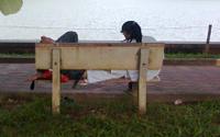 Tâm sự trong công viên, cặp đôi bị nhóm người dùng hung khí tấn công cướp sạch tài sản