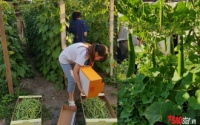 Khu vườn toàn rau quả Việt hiếm có khó tìm của cô gái 9X tại Cộng hòa Séc