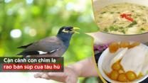 Cận cảnh con chim lạ rao bán súp cua tàu hủ