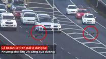 Cả ba làn xe trên đại lộ tự giác dừng lại nhường cho đàn vịt băng qua đường.