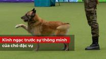Kinh ngạc trước sự thông minh của chó đặc vụ