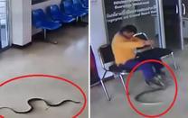 Video: Phản ứng bất ngờ của người đàn ông khi bị rắn bò vào đồn cảnh sát tấn công