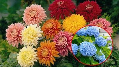 5 loại cây hoa trồng làm cảnh dễ gây ngộ độc