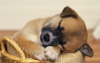 Giữa lúc dư luận bàn cãi về việc ngừng ăn thịt chó, dân mạng ầm ầm chia sẻ bức tâm thư của cún con gửi đến loài người
