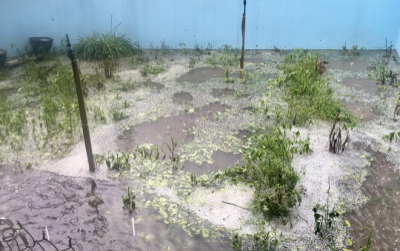 Chiều mùng 1 Tết, mưa đá xuất hiện ở các tỉnh Phú Thọ, Thanh Hóa