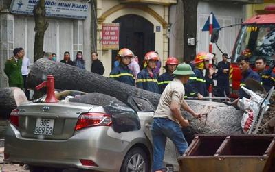 Cảnh sát cắt cành cây cổ thụ 'giải cứu' ô tô bị đè bẹp sau mưa giông lớn