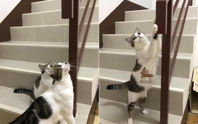 Thấy mèo cưng cào nắm tay cầu thang, vợ vô tình phát hiện bí mật động trời của chồng