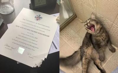 Chú mèo bất ngờ nổi tiếng vì cắn xé bằng đại học của chủ nhân