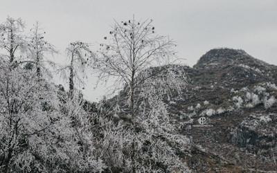 Chùm ảnh: Nhiệt độ xuống thấp kỷ lục, băng giá phủ trắng trời ở Hà Giang