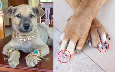 Được 'con sen' sắm cho trang sức vàng đón Tết, chú chó 'đại gia' gây sốt với thần thái sang chảnh