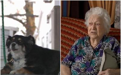 Chủ qua đời, nàng chó được thừa kế số tiền lên tới 5 triệu USD