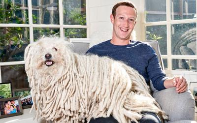 Điểm danh những chú cún cưng 'cute lạc lối' của những tỉ phú công nghệ