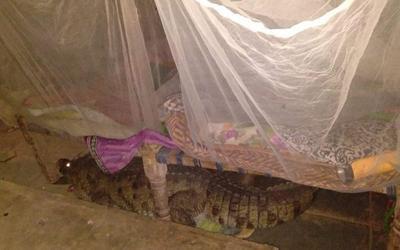 Nhìn qua khe hở lúc nửa đêm, người đàn ông 'sợ xanh mặt' khi phát hiện thứ dưới gầm giường