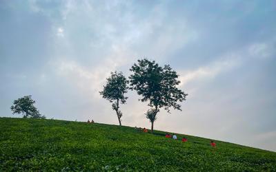 Ngắm hoàng hôn trên đồi chè Phú Thọ
